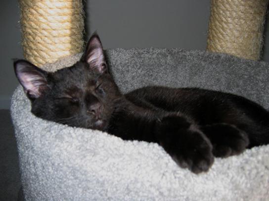 VaderSleeping.jpg